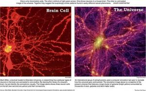Brain Cell vs Universe